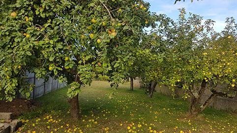 Jardin Bichat 4